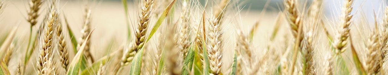 Pôle Agriculture